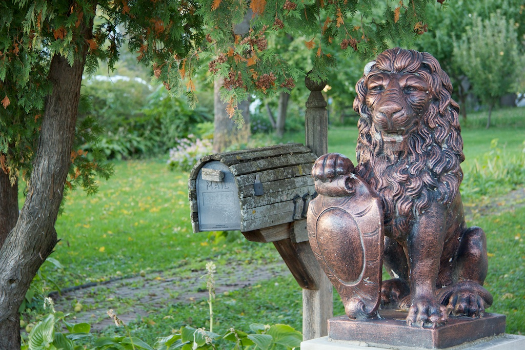 suburban lion